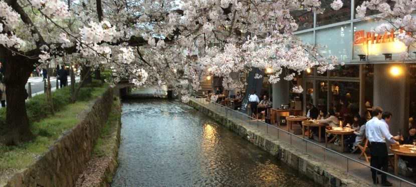 桜 Sakura in Kyoto🌸